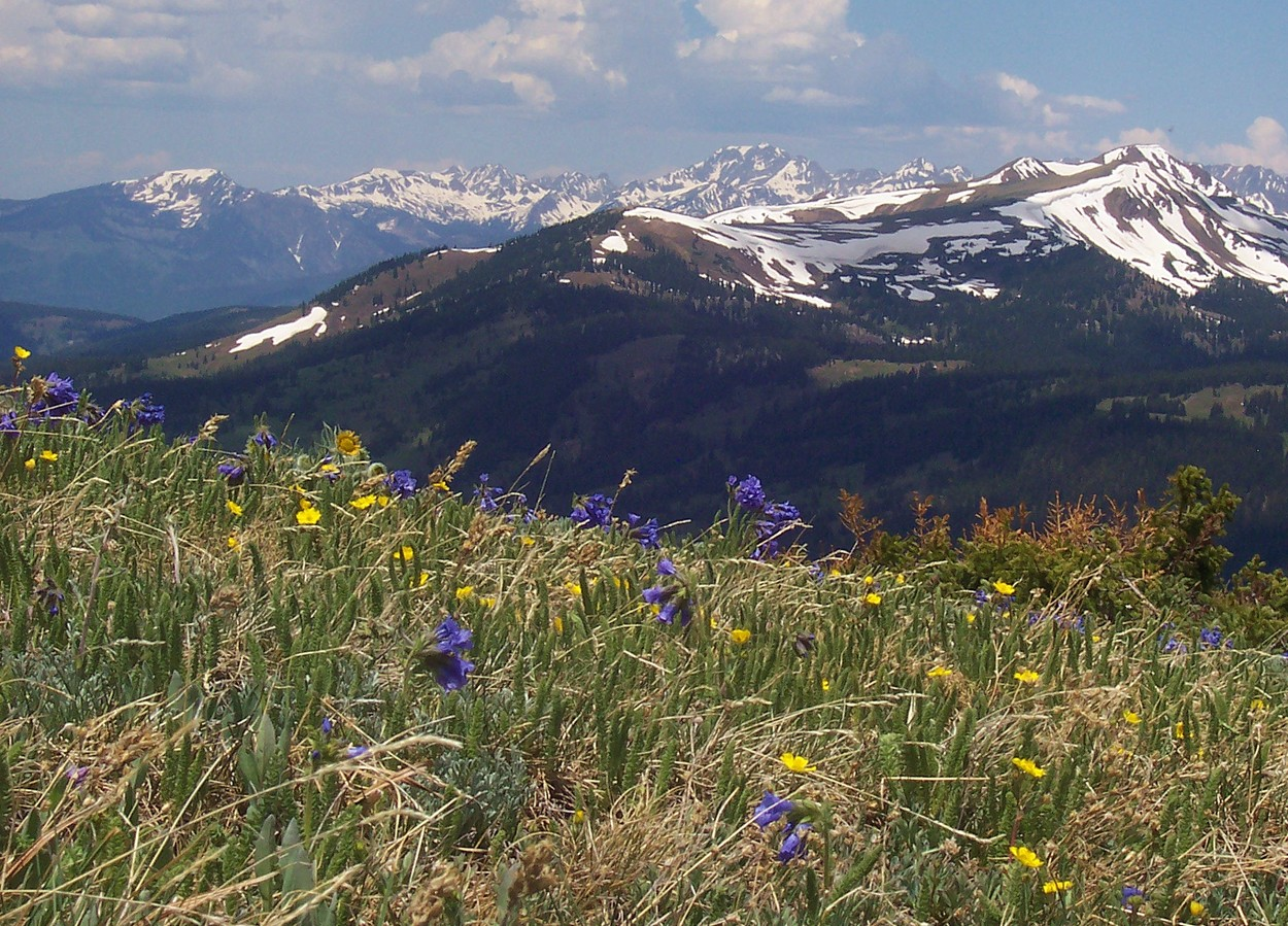 Rocky Mountain Wildflowers & Mountains